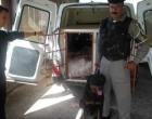 Brigada Militar usa cão treinado para descobrir abate clandestino