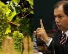 Comissão aprova venda de vinhos artesanais sem impostos