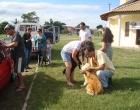 Campanha de controle animal atendeu 198 cães e gatos em Osório