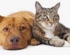 Osório: cadastro para castração gratuita de cães e gatos feito amanhã
