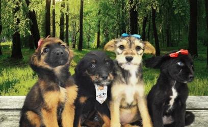cães do canil