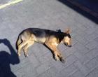 Assassinatos de cães gera protesto em Capão Novo