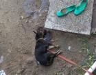 Homem mata cão e invade casa para tentar estuprar adolescente no Litoral
