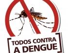 Bromélias podem atuar como focos de larvas do Aedes aegypti