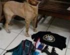 Com ajuda de cão, BM apreende armas e drogas em Tramandaí