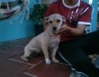 Procura-se cão perdido em Osório