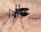 Santo Antônio da Patrulha é positivo para presença do mosquito da Dengue
