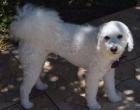 Cão perdido após acidente segue desaparecido em Osório - Gratifica-se