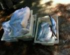 Peixaria é interditada e sete toneladas de pescado são inutilizados em Capão