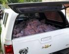 Homem é preso em flagrante por depósito ilegal de bagres para venda em Capão da Canoa