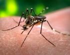 Bairro de Osório lidera focos de Aedes aegypti e preocupa autoridades