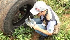 Coleta de larvas em pneus para exame laboratorialDivulgação/Prefeitura de Ernestina