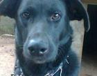 Cão perdido em Osório - Gratifica-se