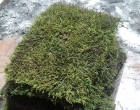 Pensando em melhorar seu gramado? Veja dicas com Grama em Leiva do Alemão