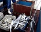Justiça suspende portaria que proibia a pesca de 450 espécies