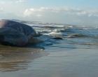 Baleia encalha e morre em praia de Imbé