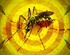 Confirmado caso importado de febre amarela no RS