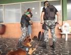 Canil do 8º BPM em Osório: faro aguçado no combate à criminalidade