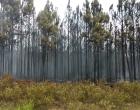Fepam notifica empresa proprietária da área que incendiou em Cidreira