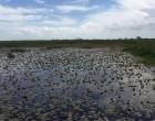 Técnicos ambientais fiscalizam Bacia Hidrográfica do Rio Tramandaí