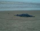 Mulher é morta a tiros na beira mar de Cidreira