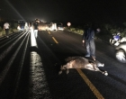 Kombi tomba na Estrada do Mar após atingir vaca na pista