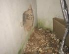 Dupla é presa após quebrar parede de banco em Torres