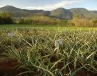 Melhoramento genético de feijão e fruticultura são debatidos em Maquiné