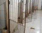 Vândalos invadem Canil Municipal de Osório