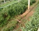 Braço humano é encontrado em plantação de flor em Itati