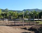 Desenvolvimento Econômico: prefeitura de Osório incentiva mais uma microempresa local