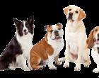 Defesa do Consumidor aprova instalação obrigatória de câmeras em pet shops