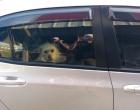 Bombeiros quebram vidro de carro para salvar cães em Tramandaí