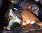 Veículo é apreendido com dois bois carneados na área rural de Tramandaí