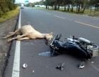Estrada do Mar é bloqueada após acidente fatal envolvendo cavalo