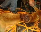 Departamento de Proteção Animal socorre cão com graves ferimentos em Osório