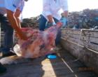 Fiscalização inutiliza meia tonelada de carne em Osório