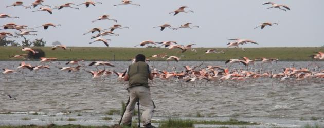 Parque Nacional da Lagoa do Peixe recebe Festival Brasileiro das Aves Migratórias