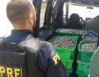 PRF apreende Mariscos em condições inadequadas de transporte em Osório