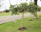 Parque de Rodeios e Eventos de Osório recebe plantio de centenas de mudas de árvores nativas