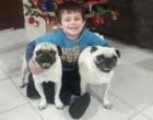 Família de menino autista encontra cães da raça pug furtados em Capão da Canoa