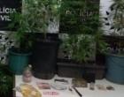 Homem é preso por manter plantação caseira de maconha em Arroio do Sal