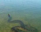 Prefeitura do Litoral emite nota para desmentir presença de jiboias em lagoa