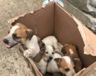 Cães são abandonados próximo a Estrada do Mar
