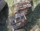 Motorista sem CNH é flagrado transportando pássaros silvestres na ERS-786
