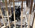 Sema apreende dezenas de animais silvestres no Litoral Norte