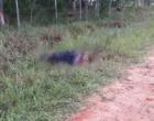Jovem é executado com tiros em Mostardas