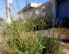 Mato toma conta de calçada no centro de Osório