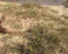 Corpo de homem é encontrado na beira mar de Tramandaí