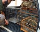 Operação apreende 18 aves em cativeiro irregular em Santo Antônio da Patrulha